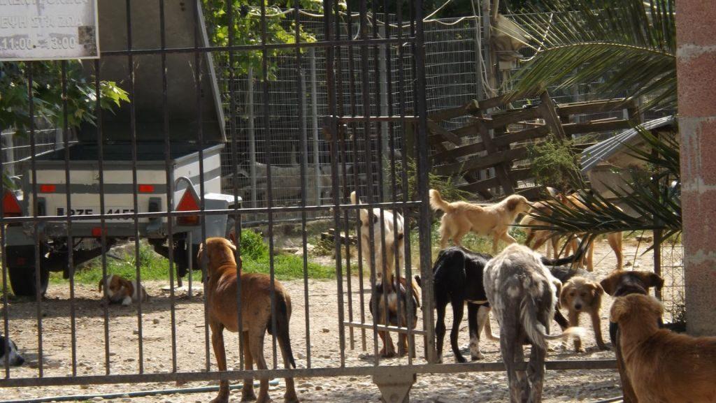 Πρέβεζα : Η ανάκληση άδειας λειτουργίας του καταφυγίου αδέσποτων ζώων βγάζει στην επιφάνεια τα προβλήματα!